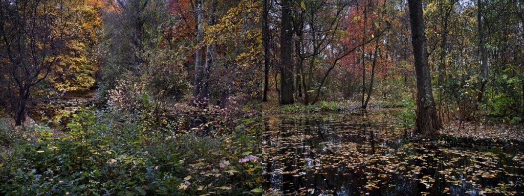 Tiergarten, Otoño 2 de Amparo Garrido