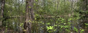 Tiergarten, Primavera 4 de Amparo Garrido
