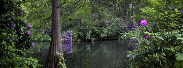 Tiergarten, Primavera 5 de Amparo Garrido