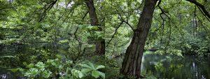 Tiergarten, Verano de Amparo Garrido